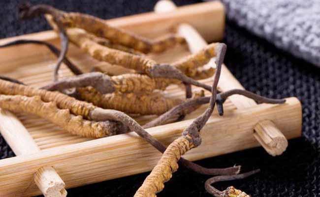 Đông trùng hạ thảo mang đến nhiều lợi ích cho cơ thể