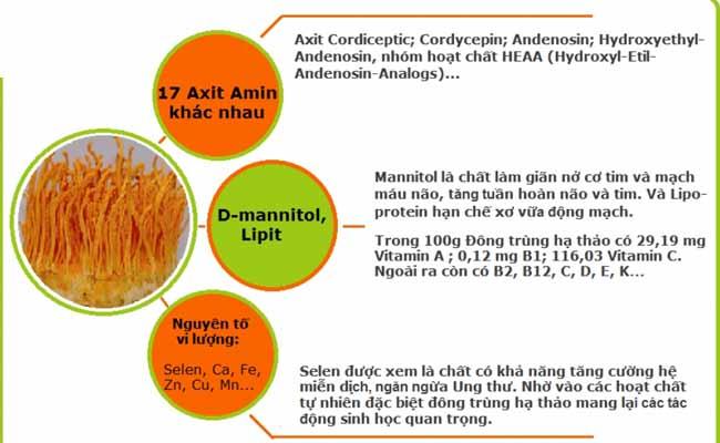 Đông trùng hạ thảo chứa thành phần dược tính đặc biệt
