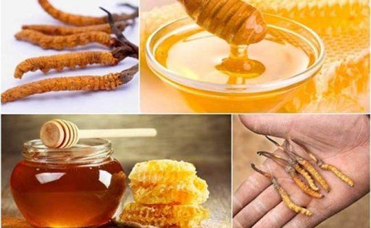 Đông trùng hạ thảo ngâm mật ong là cách chế biến được nhiều người áp dụng