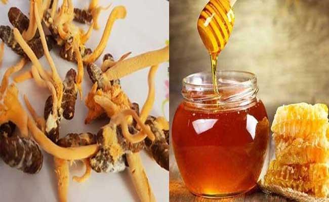 Cần lưu ý sử dụng Đông trùng hạ thảo ngâm mật ong đúng cách, đúng liều lượng