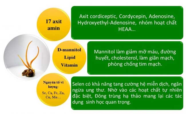 ĐTHT chứa thành phần dược tính đa dạng