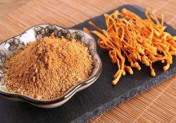 Đông trùng hạ thảo Nông Lâm được ưa chuộng trên thị trường