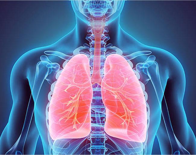 Đông trùng hạ thảo bảo vệ hệ thống hô hấp