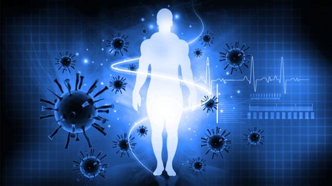 Đông trùng hạ thảo giúp tăng cường hệ thống miễn dịch