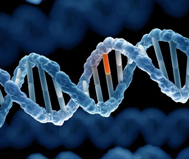 Đột biến hình thành nên gen mang bệnh tiểu đường
