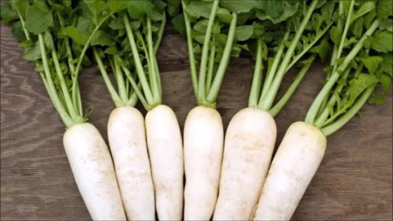 Củ cải trắng có công dụng tốt với người bị phong thấp