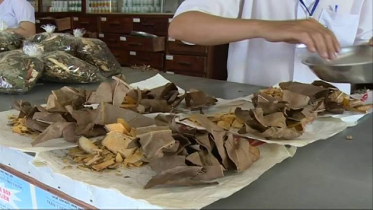 Lá sa kê có thể kết hợp với các cây thuốc Đông y để hỗ trợ chữa bệnh gout